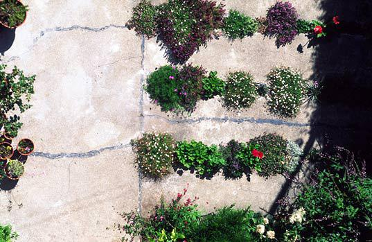Photo of the Crack Garden by Tom Fox.