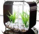 biorb-aquarium