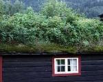 grass-roofs-2