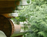 canopy-living-amongst-the-trees-forest-house
